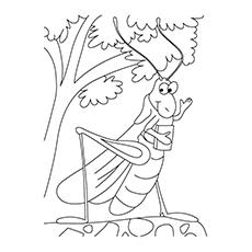 Dibujos De Saltamontes Para Colorear Dibujosonlinenet