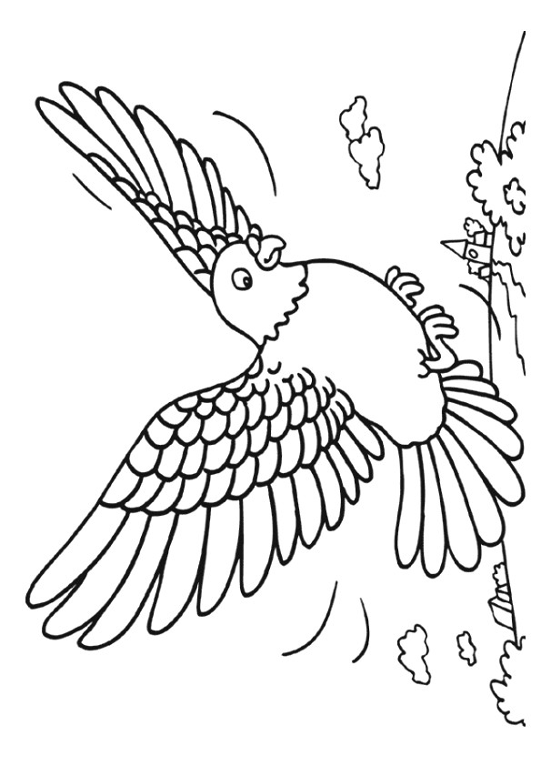 Click to see printable version of Fotos de Palomas de Roca para Colorear Coloring page