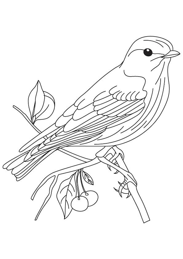 Dibujos de Gorrión Sentado en Rama para Colorear, Pintar e Imprimir ...