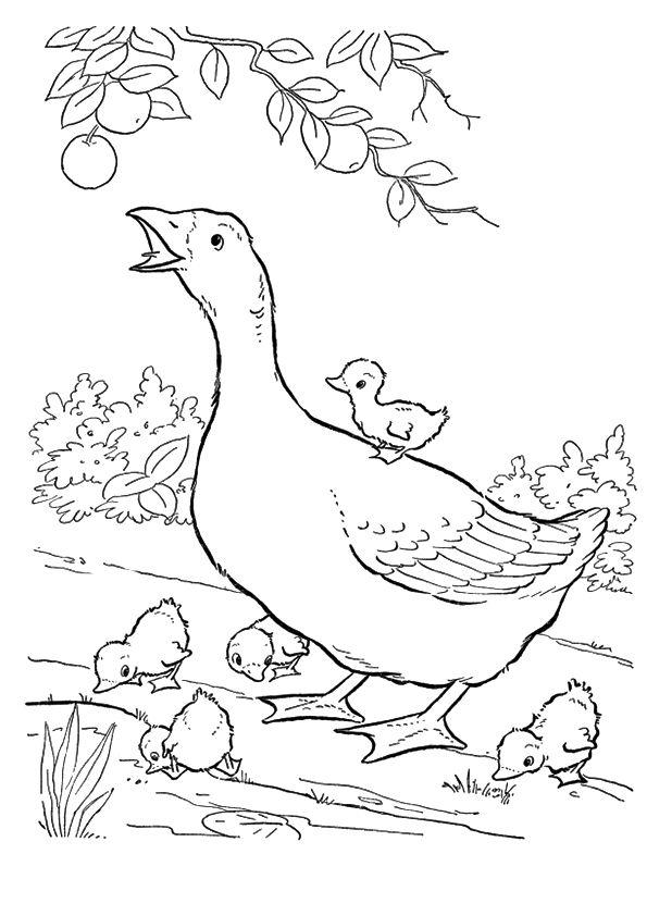 Dibujos De Madre Ganso Con Pichones Para Colorear Pintar E