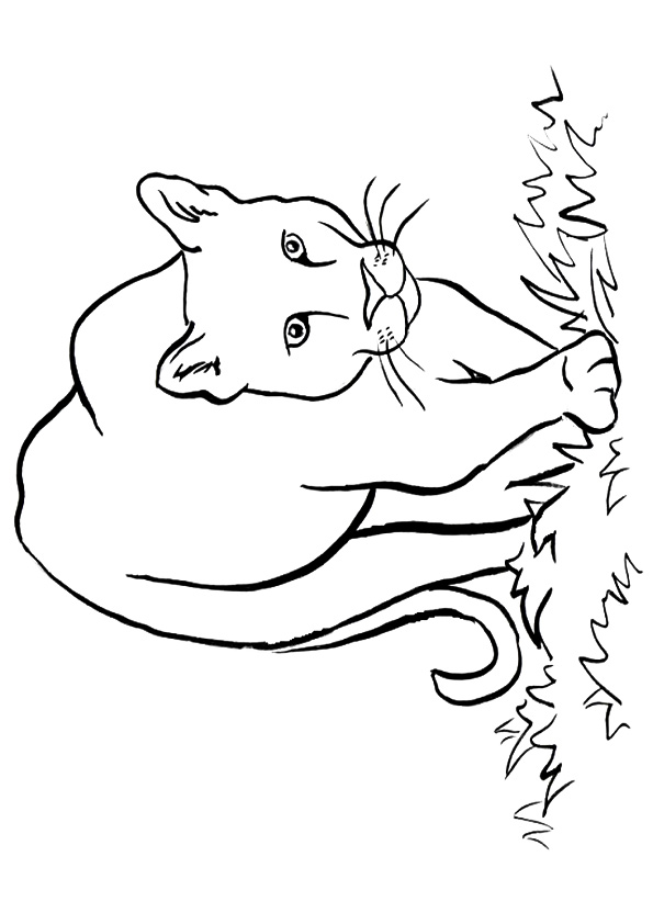 Click to see printable version of Puma Americano Coloring page
