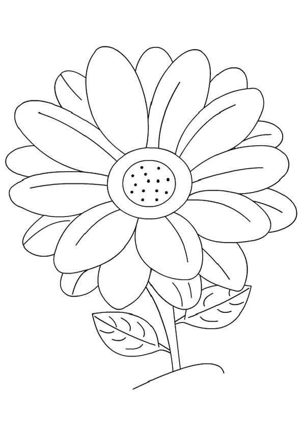 Dibujos De Una Margarita Flor Para Colorear Pintar E