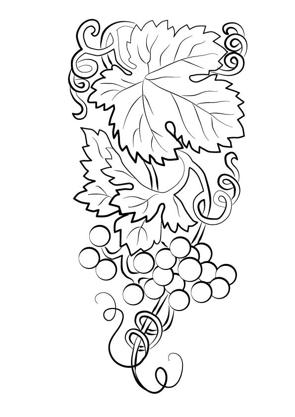 Dibujos de Hermosa Racimo de Uvas para Colorear, Pintar e Imprimir ...