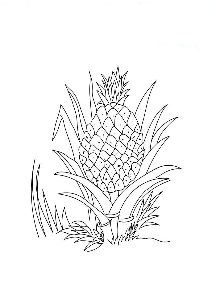 Dibujos De Una Piña Para Colorear Pintar E Imprimir Dibujosonlinenet