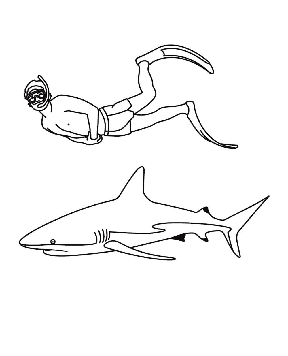 Dibujos De Tiburón Y Buzo Para Colorear Pintar E Imprimir