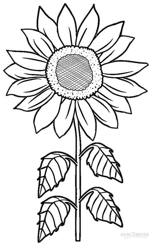Dibujos de Girasol Normal para Colorear, Pintar e Imprimir ...