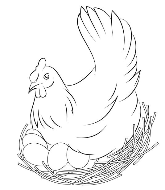 Dibujos De Gallina Y Sus Huevos Para Colorear Pintar E