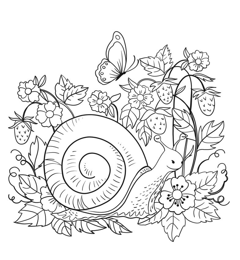 Dibujos De Caracol En Flores Para Colorear Pintar E