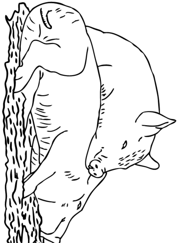 Dibujos De Dos Cerdos Durmiendo Para Colorear Pintar E